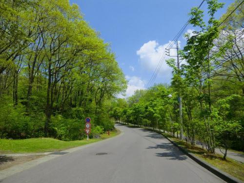 私はおもちゃ王国を通り過ぎ、新緑の気持ちのよい道(写真)を進む。