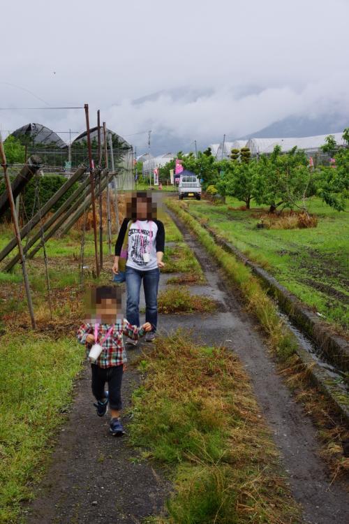 受付からサクランボ園はほんの少し離れていました。<br />ワクワクしながら走ってサクランボ園に向かう食いしん坊親子、ココニアリ。