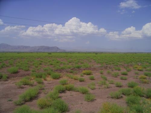 イラン北部の草原地帯<br />草原の中を走り、トルコ国境に向かう。<br />国境が近いあたりは草が目立つ。