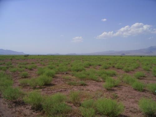 イランは砂漠の国と思われているが、<br />カビール砂漠のように乾燥が厳しい地方がある一方、<br />北部のカスピ海沿岸のあたりは、<br />雨量がやや多く、米作が行われている。<br />この付近は、ステップ気候(BS)が見られる。