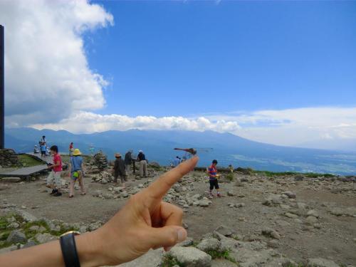 山頂付近には無数の赤トンボ(写真)が舞っており、手を差し伸べると普通に寄ってくる。暑い下界を避けて避暑に来ているのだろうか?<br />