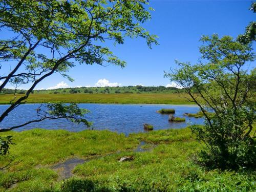 湿原に現れた鎌ケ池(写真)<br />