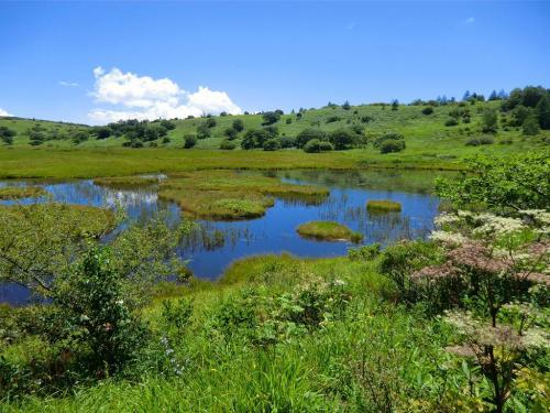 ミズゴケが浮き島のように見える「八島ケ池」(写真)までくると湿原を1周したことになる。以上、八島湿原と高山植物のお勉強は終了!妻は「大満足」私は「まあまあ」