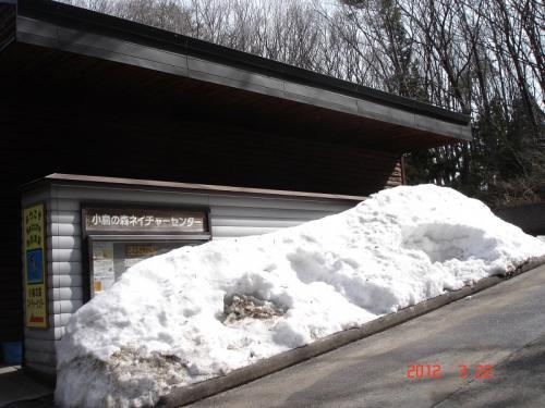 ネイチャーセンターでは、3月下旬でも屋根から落ちた雪が積もっています。<br /><br />冬鳥のベニマシコは、一週間前に北国に旅立ったそうです。