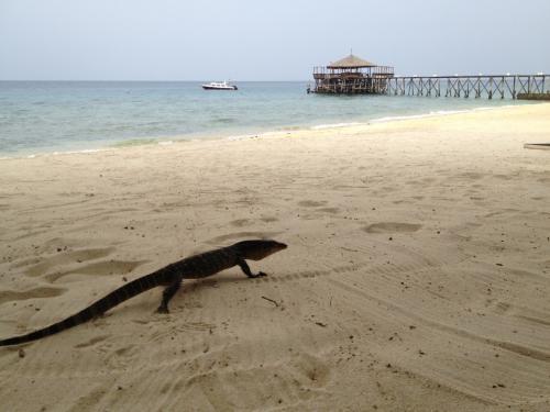 ふたたびビーチへ。そこへドラゴン登場。小振りのヤツだけど、写真撮るために近づいたら、シューーーという音を出して威嚇してきた。<br />実は昨日これよりもっともっと大きいヤツがリゾート内の岩陰にいた。ちょっとビビるサイズ。これは写真撮り損ねました。