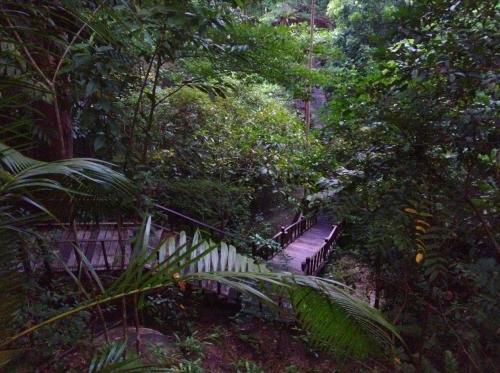 9月9日(日) ティオマン島からシンガポールへ<br /><br />今朝も早くからビーチに行って、テニスもどきのおもちゃで軽く運動。<br />写真は、部屋からビーチに降りていく道。木製の歩道がずっと続いてる。なので、ジャングルの中だけど、歩きやすいです。