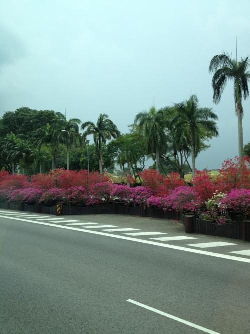 ホテルに向かって走り出す。さすがシンガポールは道がきれい。ガーデンシティと呼ぶだけのことはある。約30分でマリーナベイサンズに到着。時間は午後3時過ぎ。チェックインがちょうど始まる時間。