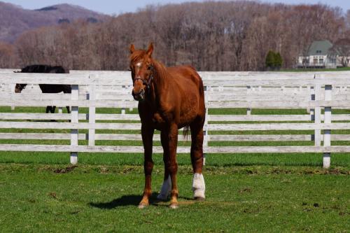 馬です。<br />後ろ足がカワイイお馬さんです。