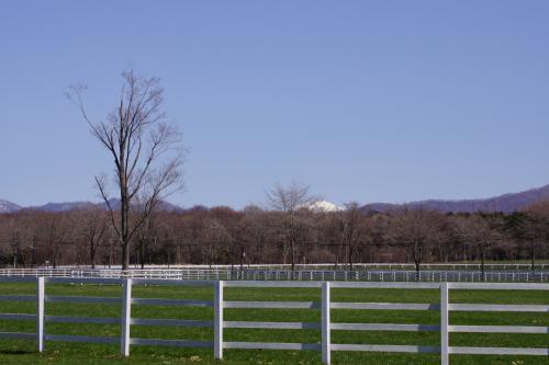 見渡す限り自然いっぱいの牧場。<br />こんなところで過ごしてたら、そりゃイイ馬も育ちそうだよ。