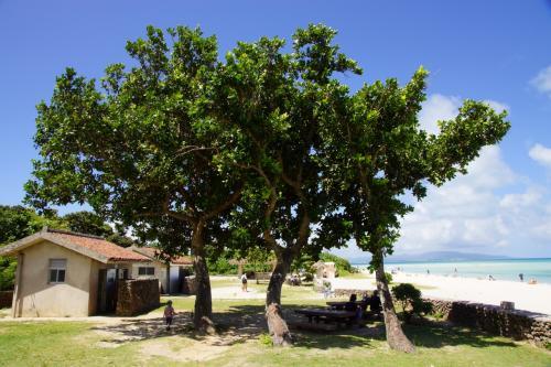 最初に向かったのは【コンドイビーチ】。<br />3本の木が迎えてくれます。<br /><br />私、このビーチ早く見たかったのね。<br />そしてちびQを海につけたかったのね。