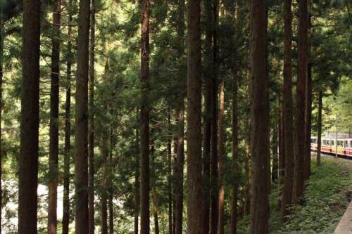 11:58<br />森林地帯を通過。