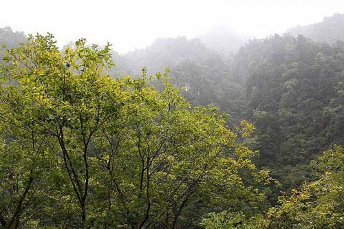 朝ぶろを浴びた帰り、ぽつぽつと天から雨が降ってきました。<br />今日は立山へ行くのでぜひ止んでほしいのですが、結構本降りになってきました。<br /><br />けど、山にかかる霞がこれまたきれいです。