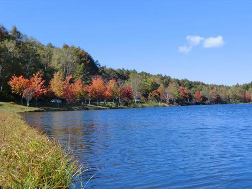 湖畔にある赤く色づいたカエデの並木(写真)をじっくり鑑賞する。<br />