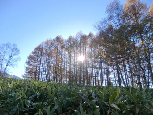 午前8時、蓼科山に登りはじめる。急ぐ登山でもないので周囲の森を眺め、写真を撮りながら、ゆっくり登る。