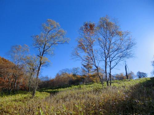 今日の空(写真)は本当に青い。夏とは違って空気が乾燥して透明感が出てきているのであろうか?