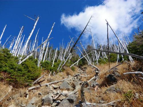 外出時には常に両足に重りを付け20 kg近いリュックを常に背負うというトレーニングを再開、2003年5月22日、70歳にしてエベレスト登頂を果たす。同時に二男・豪太との日本人初の親子同時登頂も遂げた。<br />写真:縞枯れの樹林帯