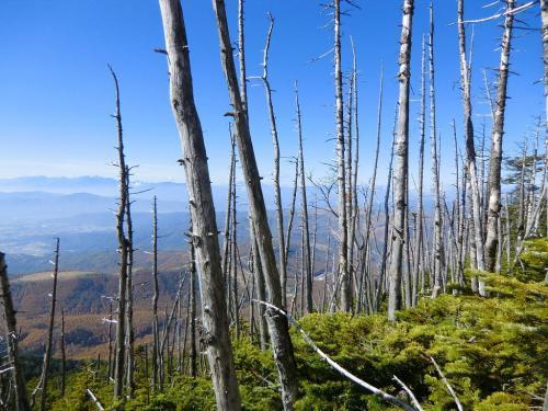 縞枯れの樹木の間から遠くを見る。ここまで来れば山頂は近い。