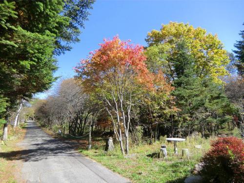 コテージのフロント前の小道(写真)を女神湖方面に歩く。赤や黄色に色づいた木々を眺めながらさっそうと歩く。<br />