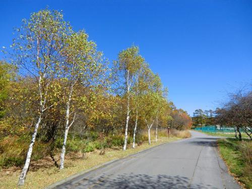 ここを下ると舗装道路に出て、マーガレット・リフレクパークになる。道路に沿って植えられた白樺の並木(写真)が随分大きくなってきた。<br />