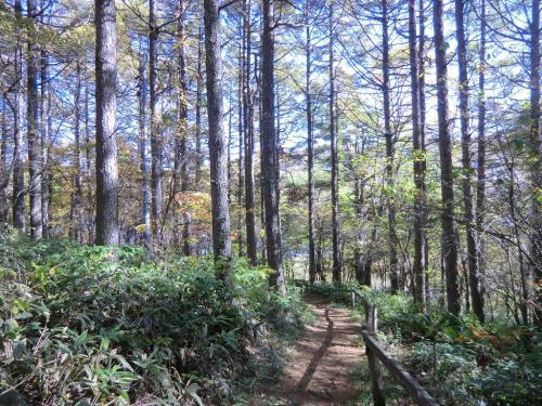 ここから落葉松の樹林帯(写真)を女神湖に向けて下っていく。<br />