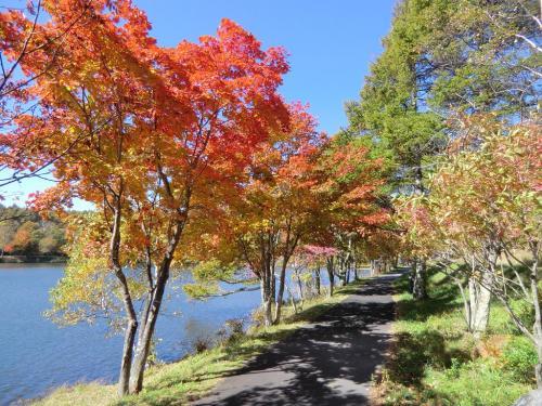 女神湖畔の遊歩道(写真)は散歩に絶好である。<br />