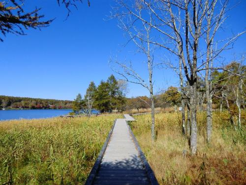 湿地帯にかかる遊歩道(写真)を歩く。