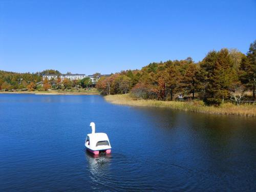女神湖センターから見た風景(写真)はとても美しく絵になる。ここから最短コースでコテージに帰る。朝(又は夕方)の散歩としては非常に充実感のあるコースである。(所要時間約1時間)<br /><br />蓼科白樺高原観光協会のホームページ<br />http://shirakabakogen.jp/sight/megami.html