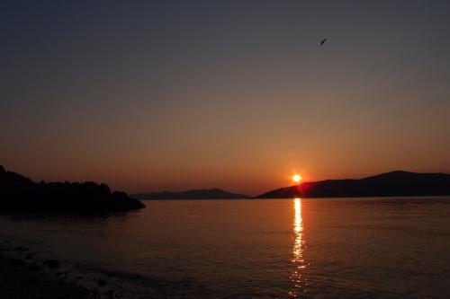 日が昇ってきました〜