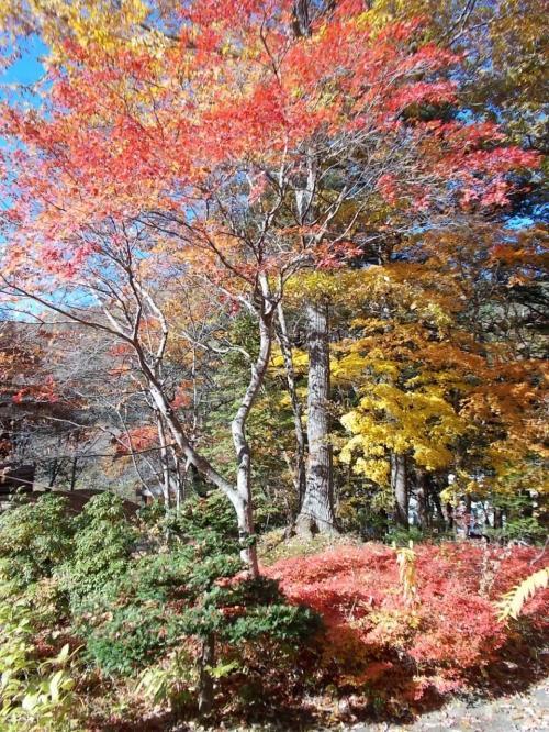 平家の里は、素晴らしい紅葉でした。