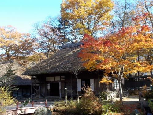 かやぶき屋根の建物の前のもみじ、建物の周りの色づいた木々も綺麗でした。