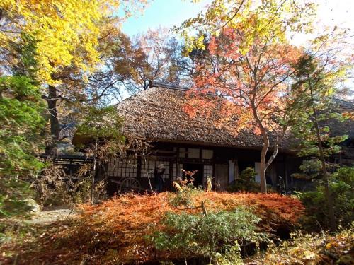 平家の里の建物は、ほとんどがかやぶき屋根で、紅葉がひたっていました。