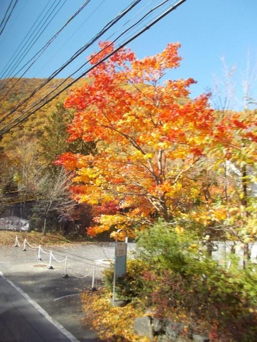 バスの中から、素晴らしい もみじ。 これからの紅葉が、たのしみ!