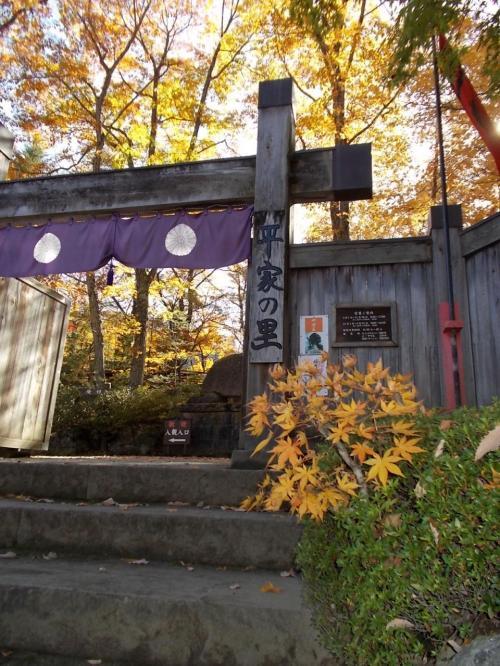 これから平家の里に入ります。<br /><br />入り口は、色づいた木々の黄色が綺麗。