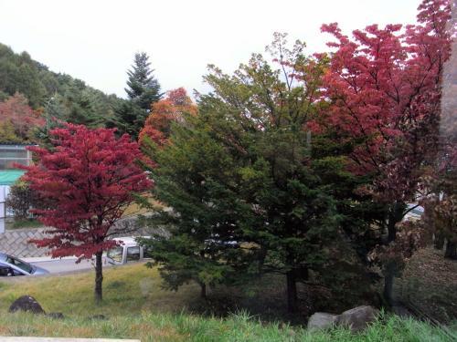 しっかりと色づいた紅葉も見える。