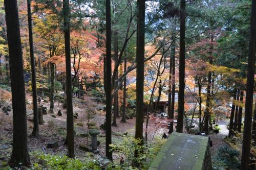 山道をどんどん登ると、紅葉が下を彩っている。