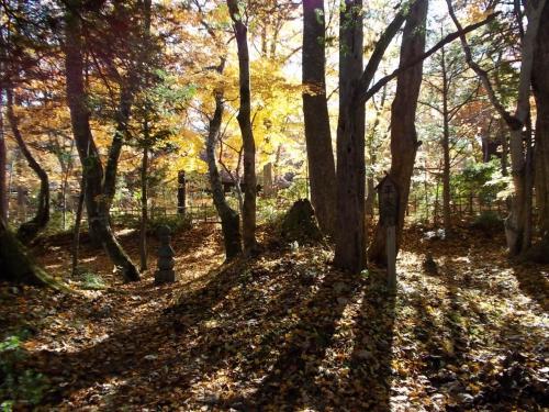 だいぶたちましたが、<br /><br />平家塚の写真も綺麗だったので、<br />何枚か写真を 追加しましす。<br /><br />後ろの色づいた木黄色が綺麗でした。