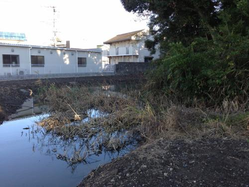 諏訪曲輪の土塁跡と堀の沼地。