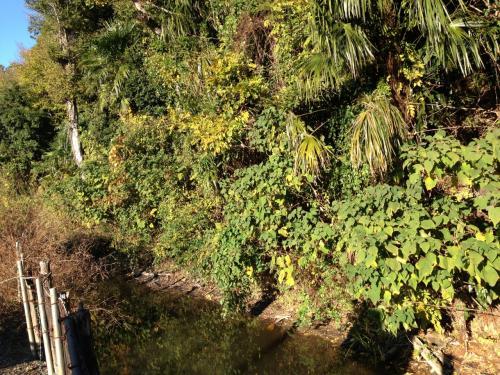 神社に沿って土塁はきれいに名残をとどめています。<br />一見すると単なる雑木林にしか見えません。