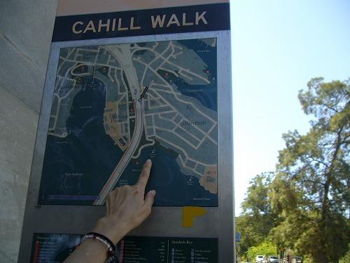 ハーバーブリッジを渡って北シドニー(North Sydney)に辿りついた。渡ったはいいが,戻るためのフェリー発着場(埠頭:wharf)がわからない。困っていると親切なオジサンが道を教えるだけでなく一緒に歩いて案内してくれた(今回の旅行に限らず,オーストラリアの人たちは実に親切だ。だからこれまで不愉快な思いをしたことがない)