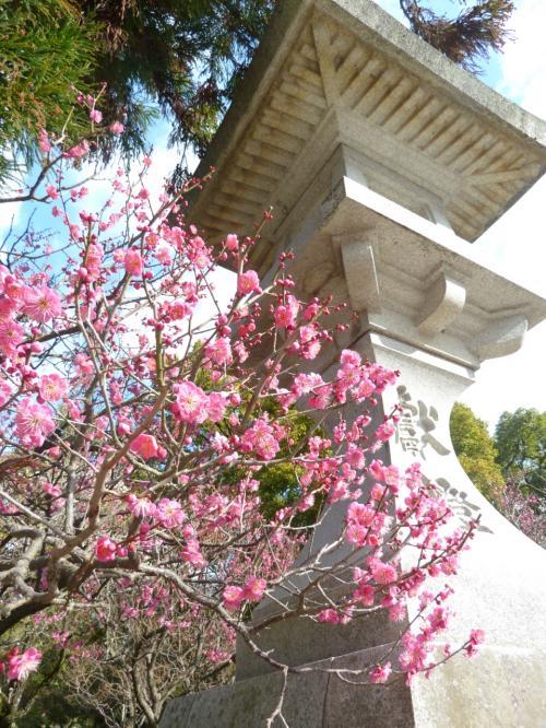 入口にきれいに梅が咲いていました。