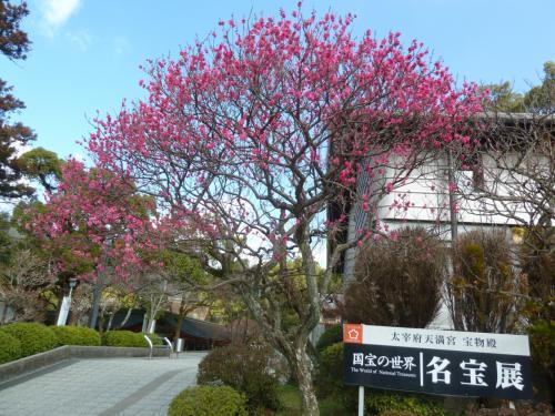 博物館に行く道の梅は綺麗に咲いていました。