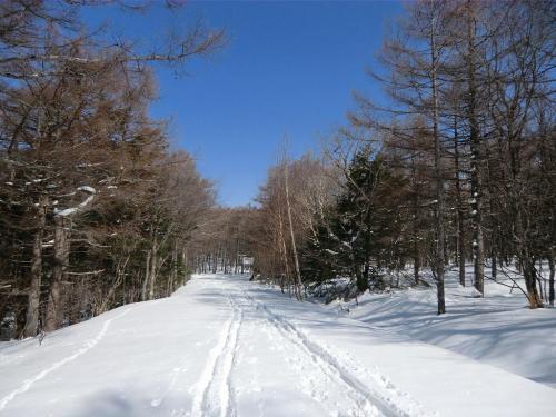 冬期閉鎖中の「蓼科スカイライン」(写真)に出る。今日は天気が良く、しかも雪は適度に締まっているので歩きやすい。最高のコンデションである。<br />