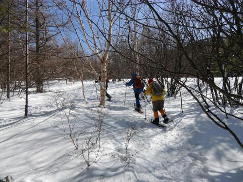 木嶋さんは傾斜が緩い場所を見つけては蓼科スカイラインをショートカットして森(写真)に入る。これが面白い。<br />