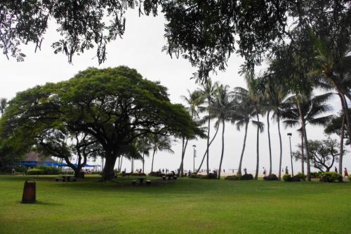 朝食後に<br />いつもラナイから眺めている公園<br />から海岸に出てみる