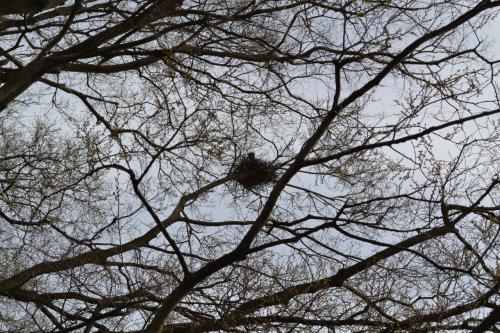 鳩?かな。木の上に巣を作っていました。可愛そうに、沢山の人間が来て、大賑わいで、さぞかしお母さんは落ち着かなかったことでしょう。