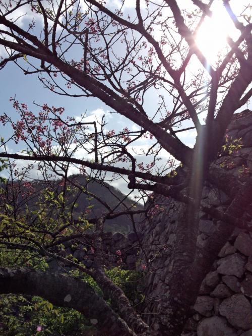 途中には桜が♪<br /><br />