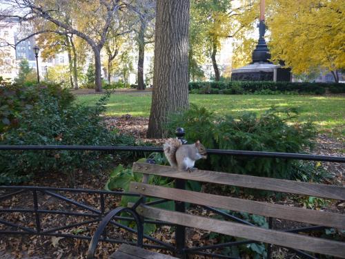 どちらかと言えば小さい公園ですが、ここにもリスがいます。