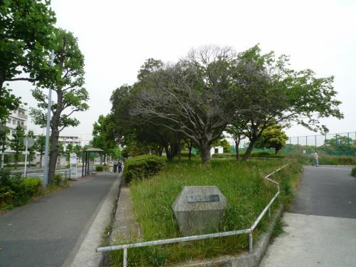 洋光台公園