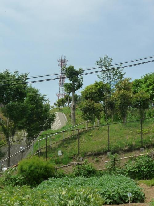 円海山の鉄塔