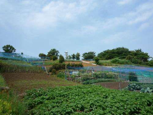 円海山の畑
